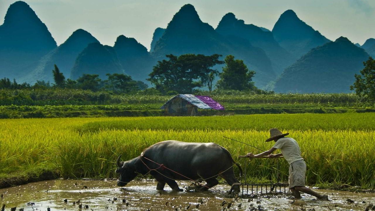 Pentingnya Regenerasi Para Petani Di Indonesia
