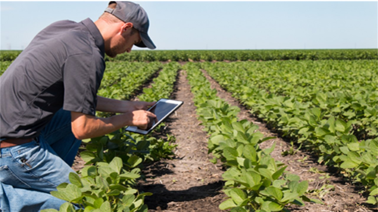 Memiliki Prospek Keuntungan Besar, Milenial Harus Bertani